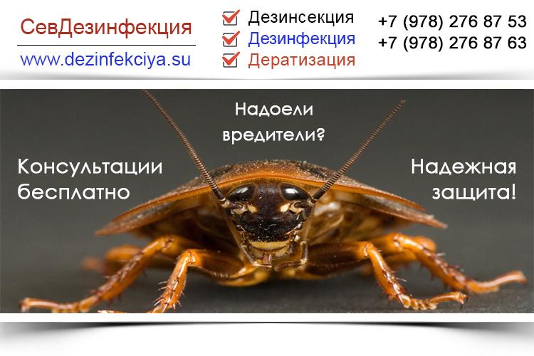 Дезинсекция, дератизация. Севастополь